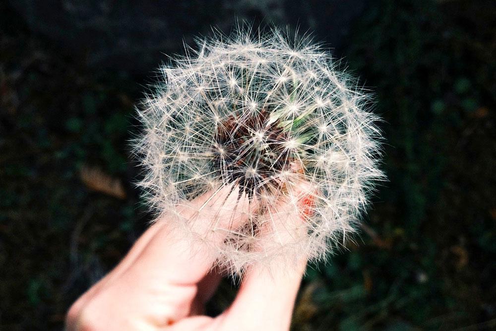 Esprimi un desiderio